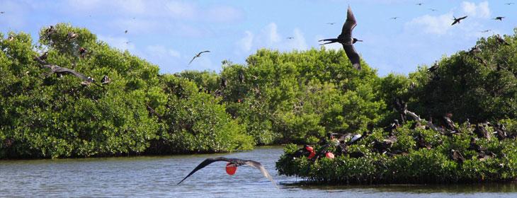 frigate-bird-santuary-feature